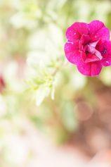 店先の花たちは元気、元気、元気でいっぱい